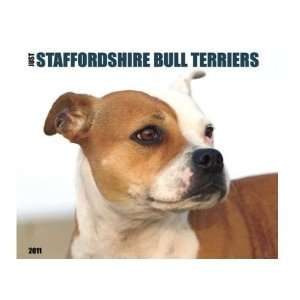 Just Staffordshire Bull Terriers 2011 Wall Calendar By Willow Creek