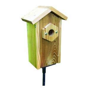 Window Viewing Nest Box W/ Suction Cups SP2HV